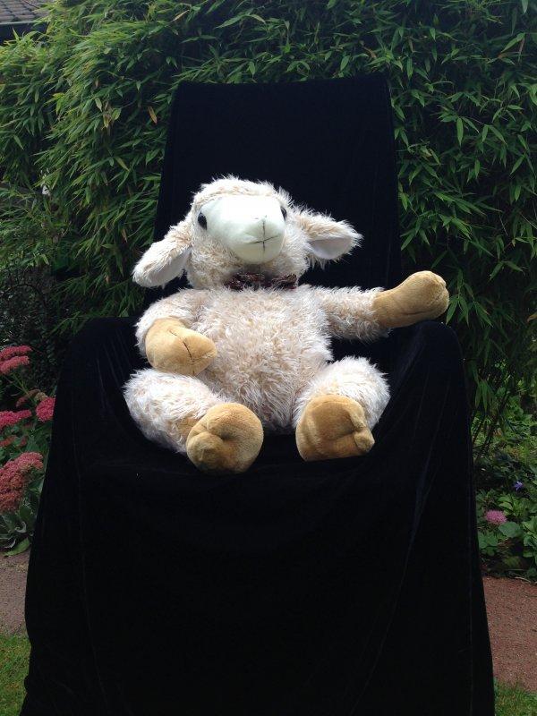 Reduziert! - Freundliches Schaf...