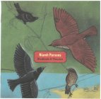 Niambh Parson – Blackbirds & Thrushes